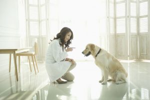 Some Careers For Dog Lovers